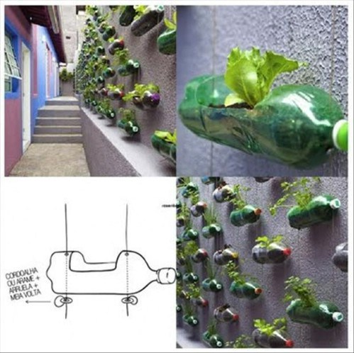 Hydroponics in Wall Wall of Bottles Used