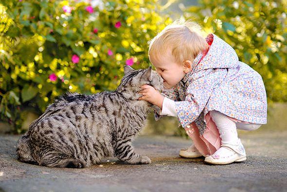 Menyayangi Hewan