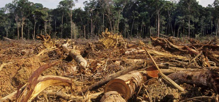 Dampak dari Penebangan Hutan Secara Liar