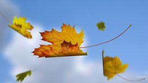 blue sky falling leaves